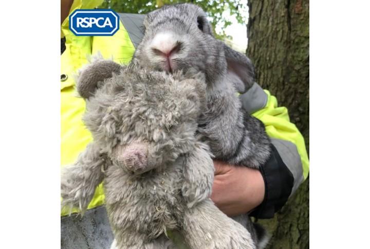 Coniglio abbandonato a Londra con il suo peluche diventa una star dei social