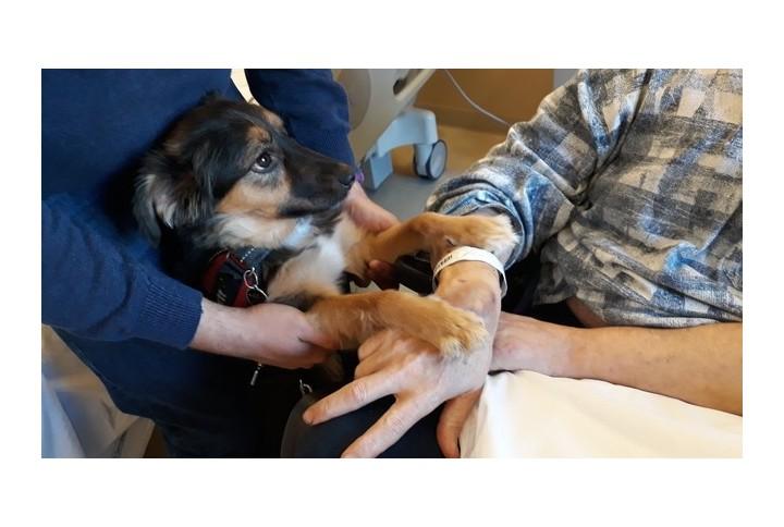 Colpito da ictus vede il suo cane e ricomincia a parlare